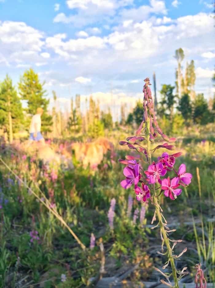 Granby Lake Colorado Guide   Blue Mountain Belle
